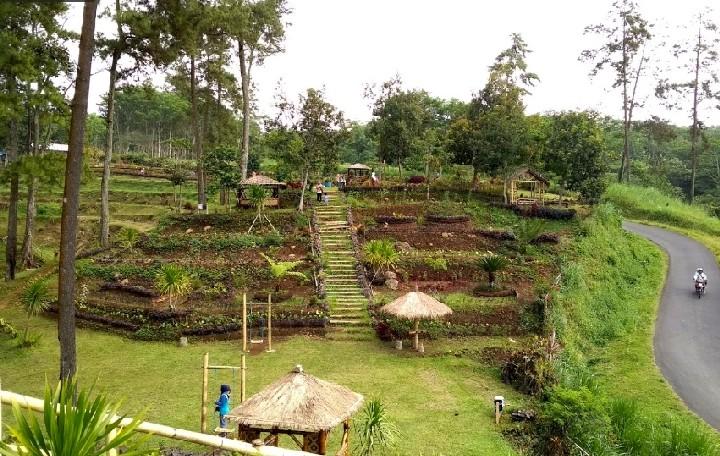 Lokasi Tlogo Land