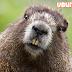 Ubuntu 18.04'ün Kod Adı ve Çıkış Tarihi Belli Oldu