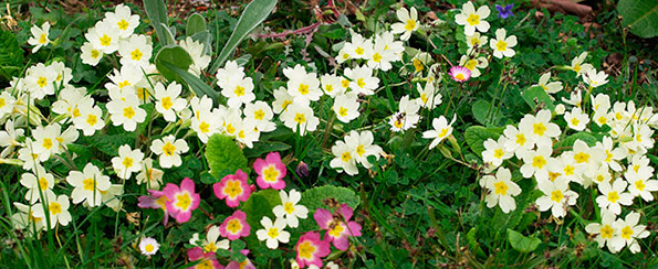 Color en el jard n todo el a o plantas que florecen en febrero for Plantas para el jardin todo el ano