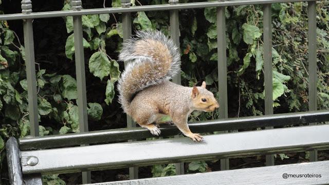 Esquilo no Hyde Park - Londres