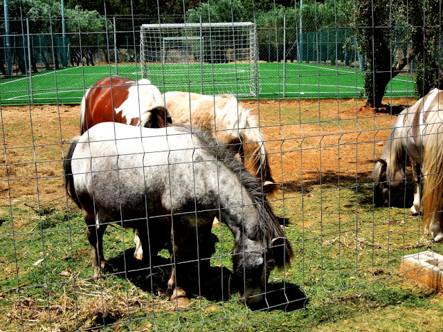 cavalli, animale, prato, tenuta