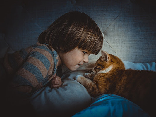 Reasons to Get a Pet Cat for Your Children