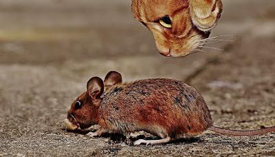 Cara Mengusir Tikus dan Curut Beserta Pencegahan Agar tidak Masuk Rumah