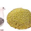Manfaat Milet Untuk Pakan Burung