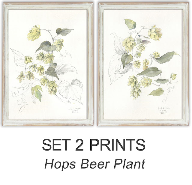 https://www.etsy.com/listing/470093394/hops-beer-plant-drawing-set-2-prints?ref=shop_home_active_1