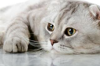 Ποια είναι η τέλεια μουσική για γάτες;