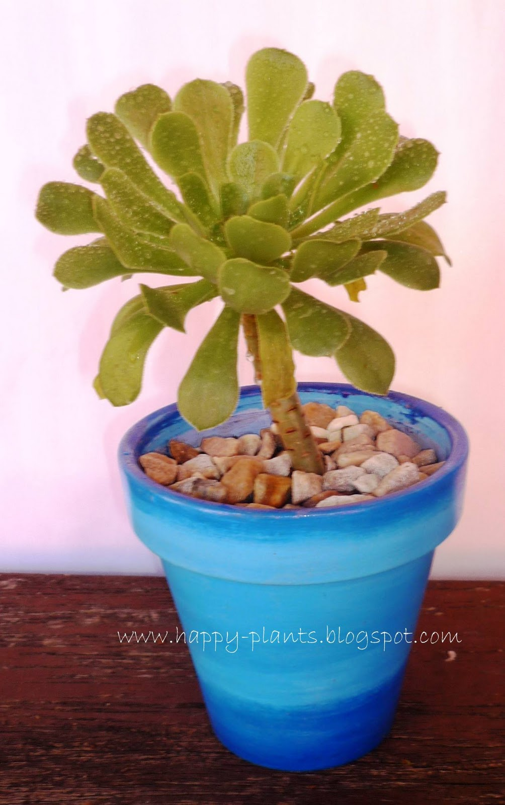 Macetas Pvc Happy Plants: Happy Plants En Macetas Con Diseño De 14cm