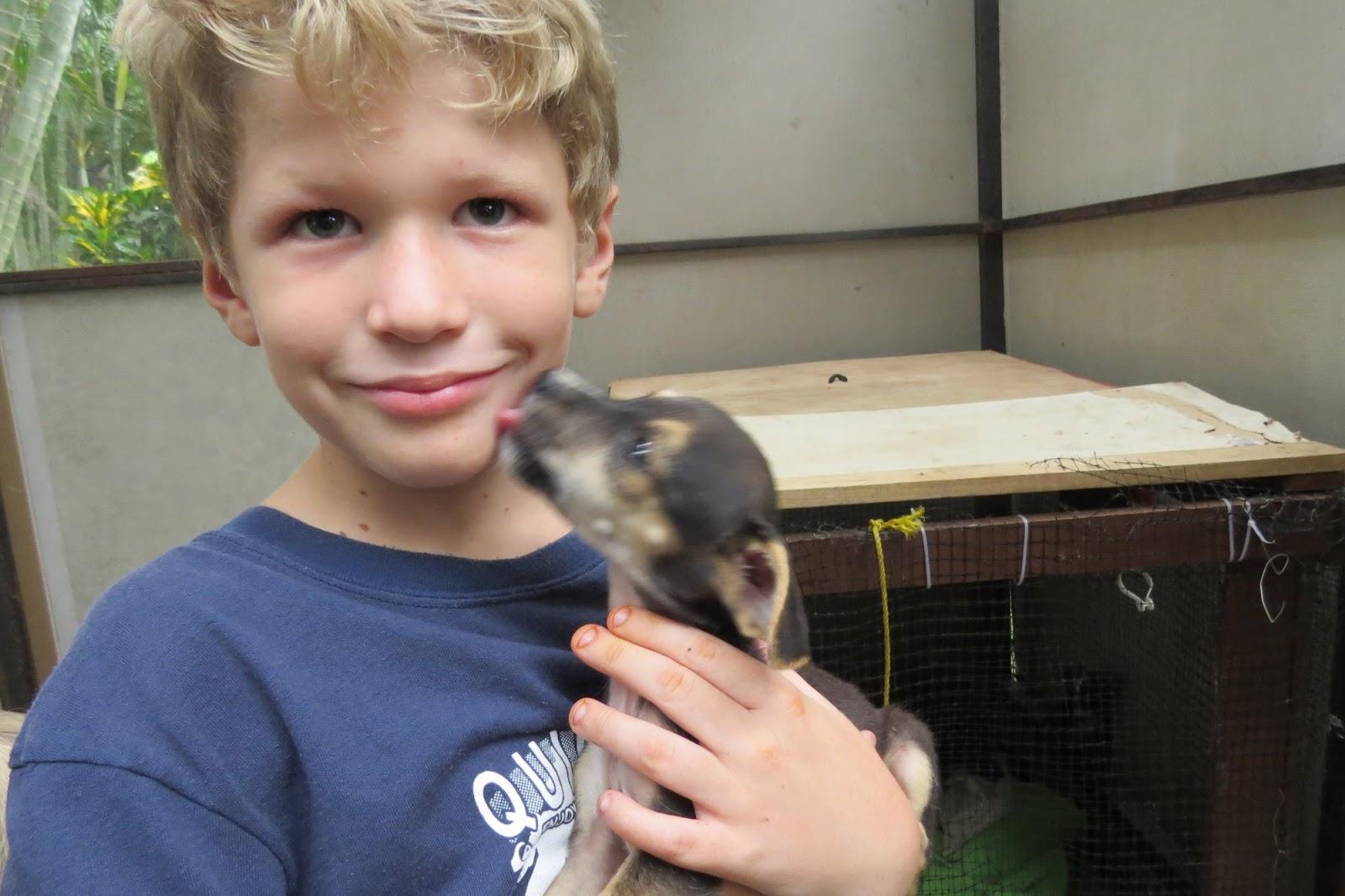 Cebadilla Costa Rica Animal Rescue Center - Costa Rica HAPPY