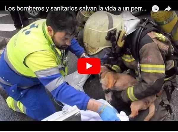 Bomberos salvan la vida de un perro intoxicado con humo