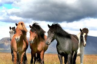 hewan terpintar dan tercerdas di dunia - kuda