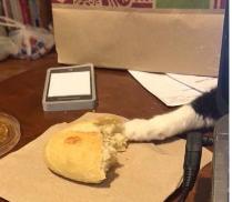 Γάτα-ληστής επιχειρεί να αποσπάσει ένα κομμάτι ψωμί