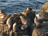 Visit Sea Creatures In Their Natural Habitats