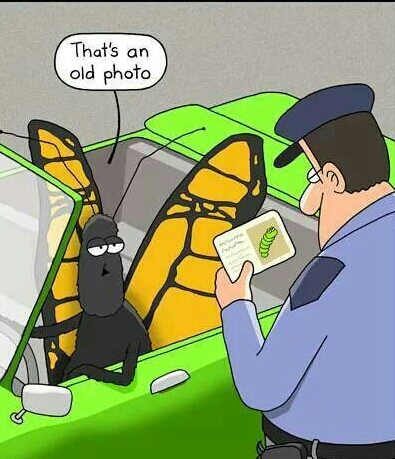 Funny cartoon of a butterfly getting pulled over by the policeGetting Pulled Over