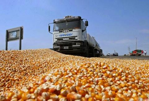 Agricultores enfrentam desafios para escoar produção de soja