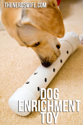 Bark City Doggy Daycare Diy Enrichment Games For Your Dog