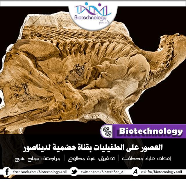 دراسة تفيد العثور على طفيليات في القناة الهضمية للديناصورات!