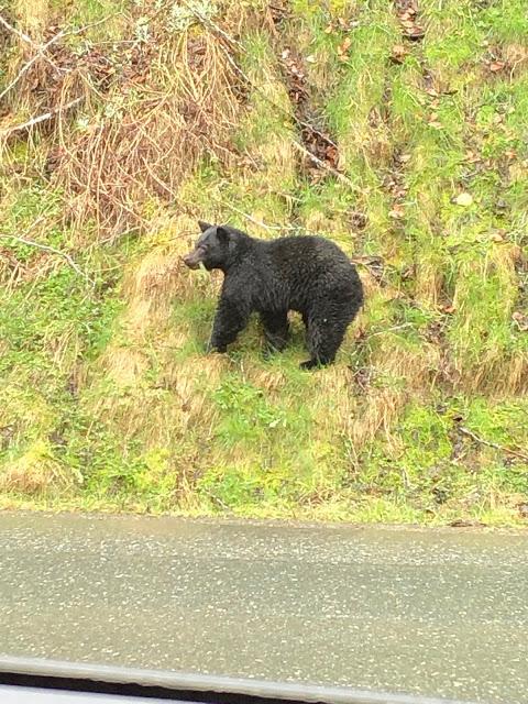 first bear sighting of the season