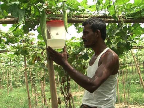 Tangail villages set laudable example of organic Farming || SHYKH SERAJ