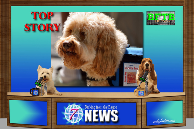 BFTB NETWoof News report on fake service dogs