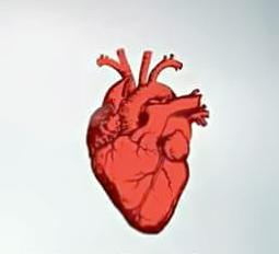 Gambar Resiko Jantung Koroner, Insidensi Dan Penyebab Jantung Koroner
