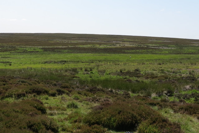 An expanse of moorland in various shades of green - the brightest swathe indicates the wet ground and bogs.