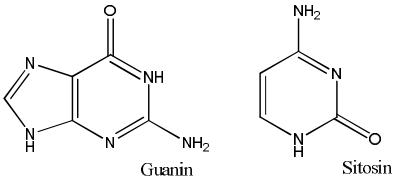 molekul guanin dan sitosin