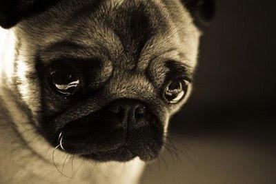 fotofesto: Animals Expressions : Sad Face Sad Animal Face