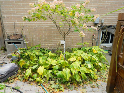 Toronto Fall Cleanup Before Don Mills Backyard by Paul Jung Gardening Services--a Toronto Organic Gardening Services Company