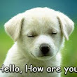 HELLO, HOW ARE YOU? I'M FINE THANK YOU, AND YOU? (đối đáp thần thánh)