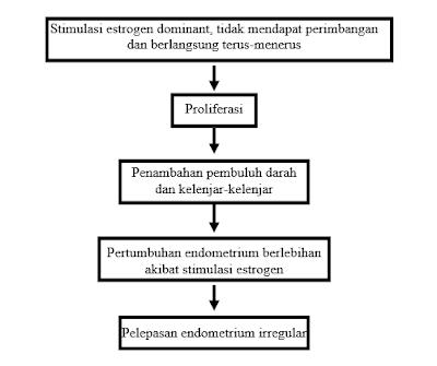 mekaanisme-perdarahan-uterus-disfungsional