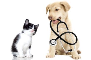 Pet Insurance! is it worth the money?