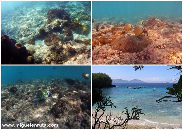 Snorkel-Blue-Lagoon