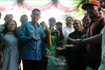 Wakil Bupati Lampung Timur Panen Jagung Bersama Kementerian Pertanian