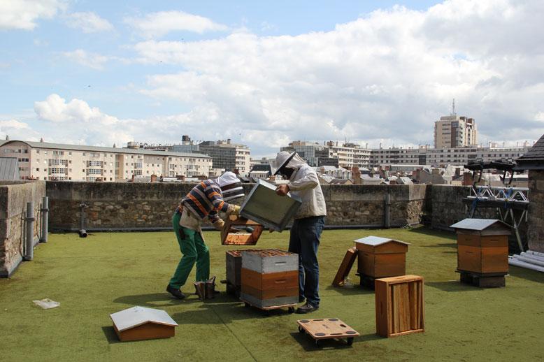 le blog de yves ollivier un petit cours d 39 apiculture appliqu. Black Bedroom Furniture Sets. Home Design Ideas