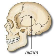 Eklem Çeşitleri Ve Anatomisi