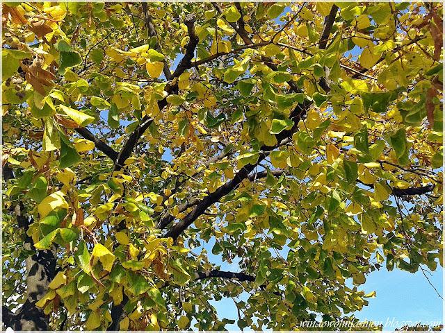 Kolorowe liście na drzewie