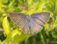 Mesmo que se tratando de uma minoria, há borboletas que possuem hábitos noturnos e mariposas com hábitos diurnos.  Embora muitas das mariposas apresentem antenas bastante evidenciadas, algumas podem ser bastante parecidas com as das borboletas . Assim como o corpo da mariposa pode também não ser tão desproporcional ao da borboleta. E pode ainda haver momentos em que as mariposas se posicionem com as asas fechadas ou as borboletas com elas abertas. Portanto, uma análise leiga pode ser comprometida pelas exceções que fogem às regras.