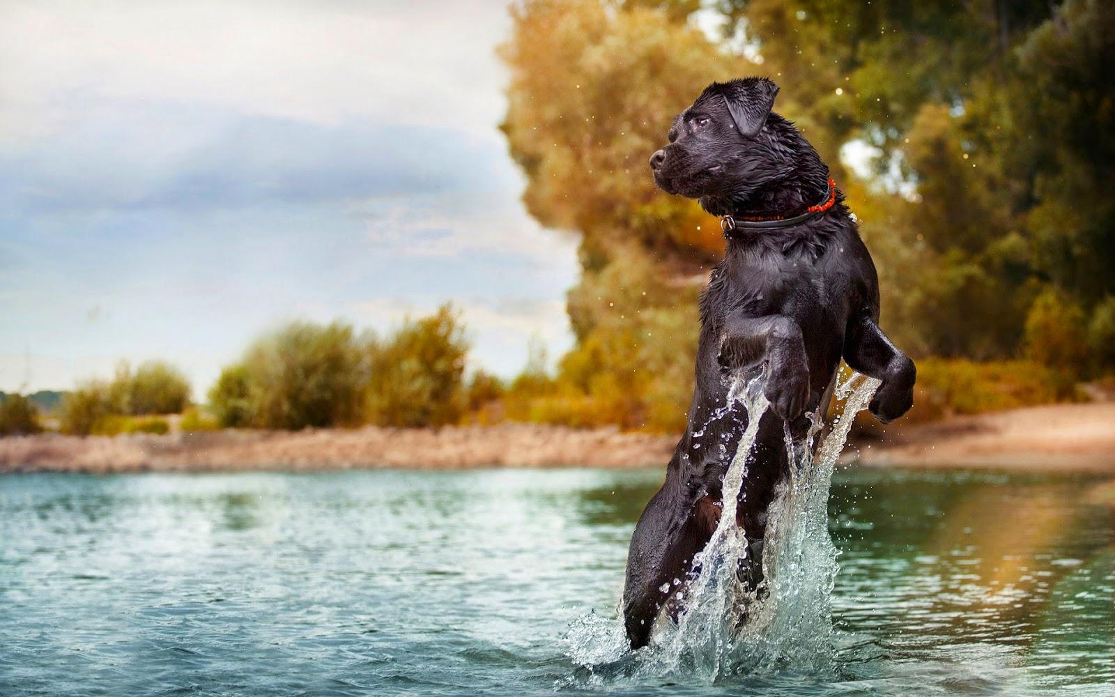 Hond springt op uit water