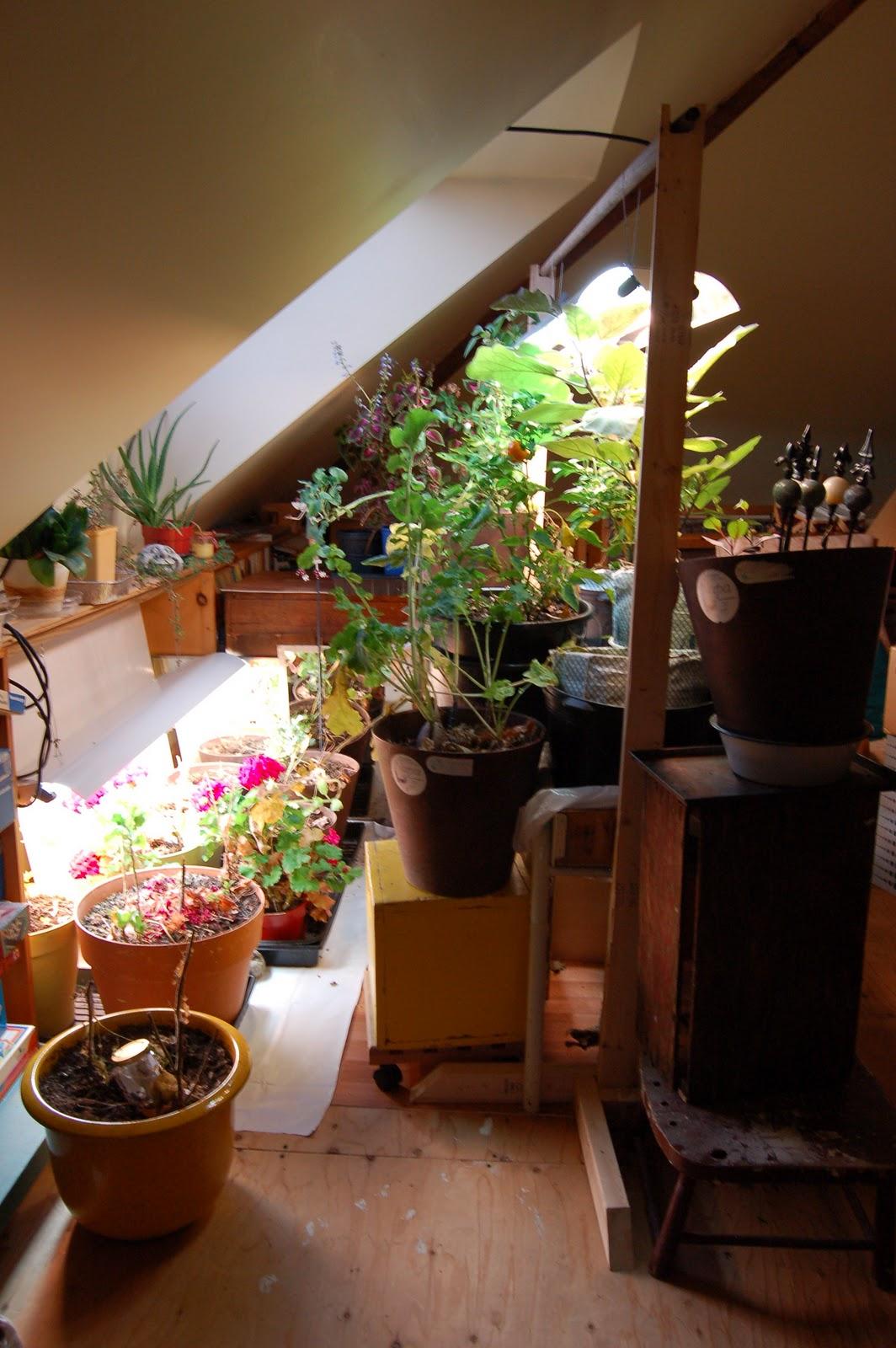 3 jardins au qu bec pour l 39 hiver pourquoi ne pas inviter - Bord de fenetre interieur ...