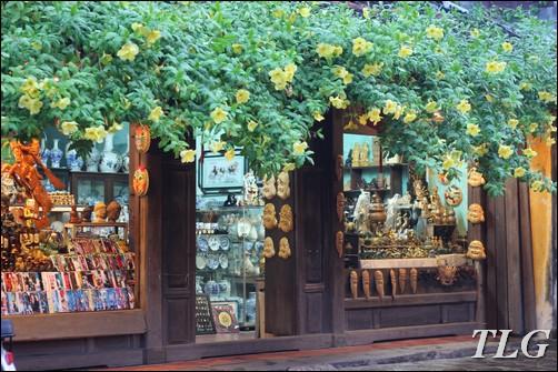 cây leo, cây leo giàn, cây leo giàn hoa, cây leo giàn hoa đẹp, cây leo giàn nhanh, hoa leo, hoa leo giàn, hoa leo giàn đẹp, Hội An