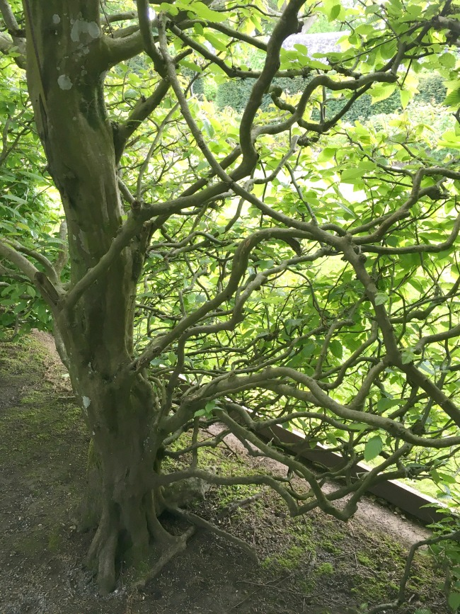 close-up-of-knarled-branches-of-trees-St-Fagans-Castle-and-gardens
