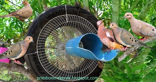 Mimpi dapat burung perkutut dalam togel