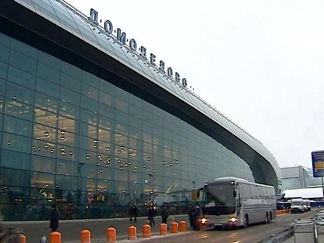 В Домодедово у пассажира из Дубая нашли в рюкзаке почти 300 рептилий и насекомых