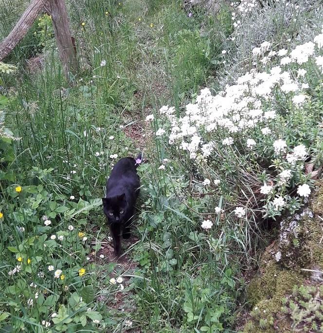 Pilus giardiniere fontanigorda fine maggio for Giardino trofeo