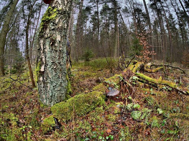 die Überreste eins Baumes sind von Moos und Pilzen bewachsen