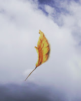 leaf flowing with air indicating emotions