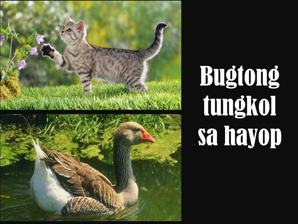 Mga Halimbawa Ng Bugtong