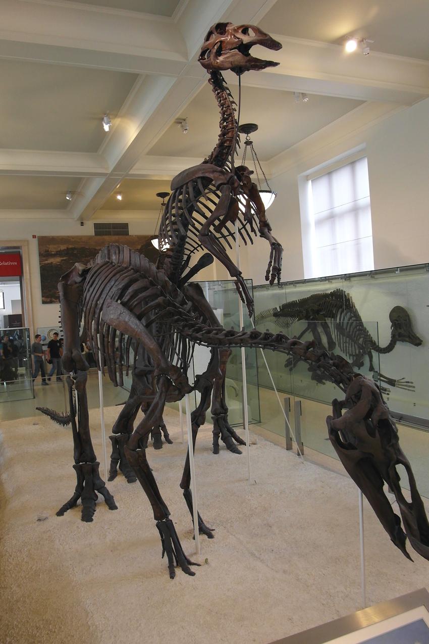 Amerykańskie Muzeum Historii Naturalne w Nowym Jorku