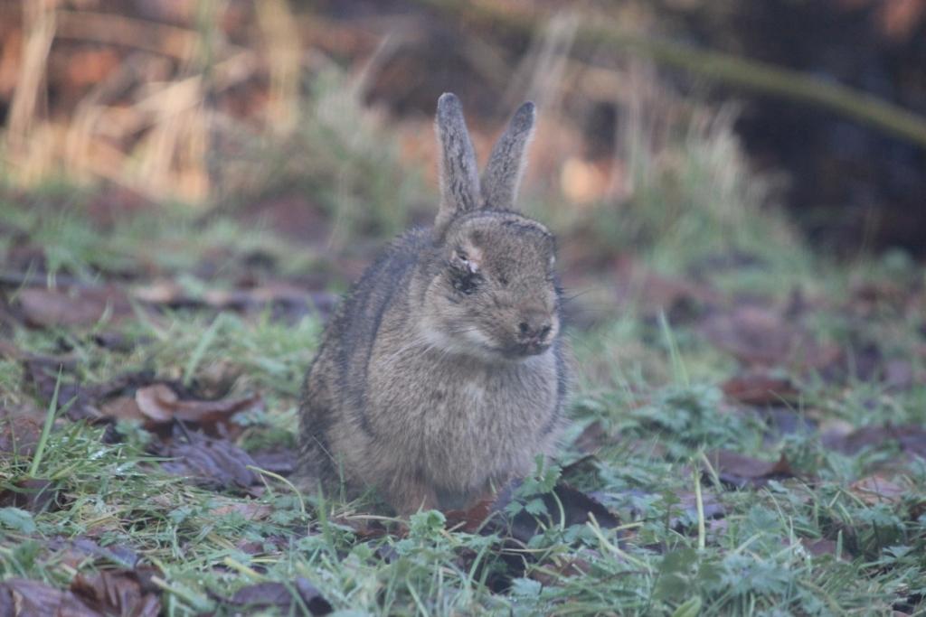 Animals And Kids Blind Wild Rabbit Myxomatosis