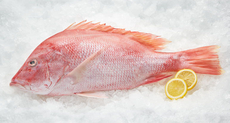 red snapper fish wholesale  pasteurized crab meats